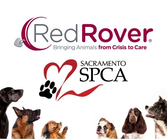 Red Rover SSPCA Graphic