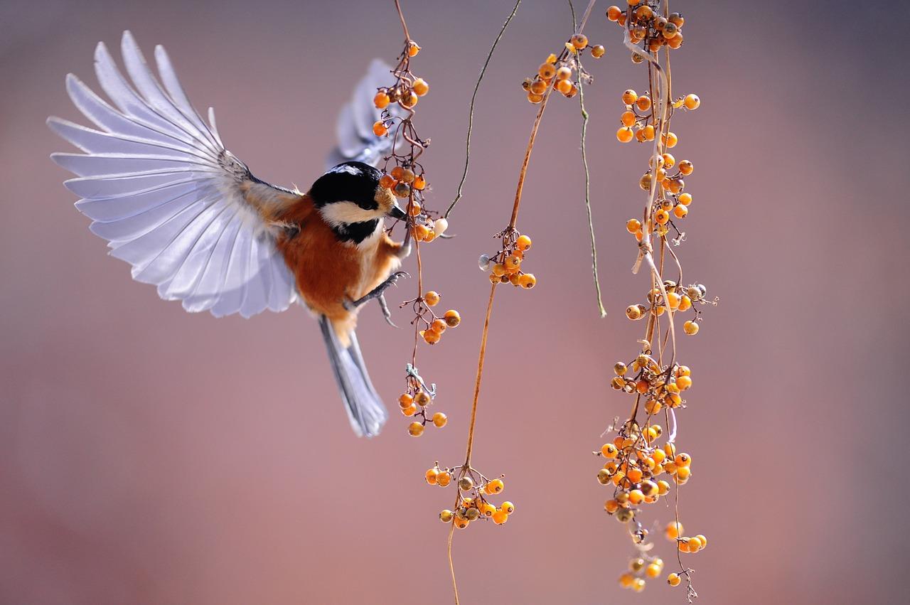 bird-1045954_1280