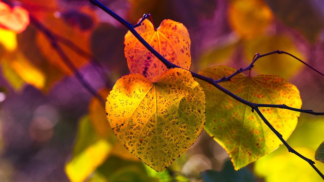 autumn-leaves-3813741_1280