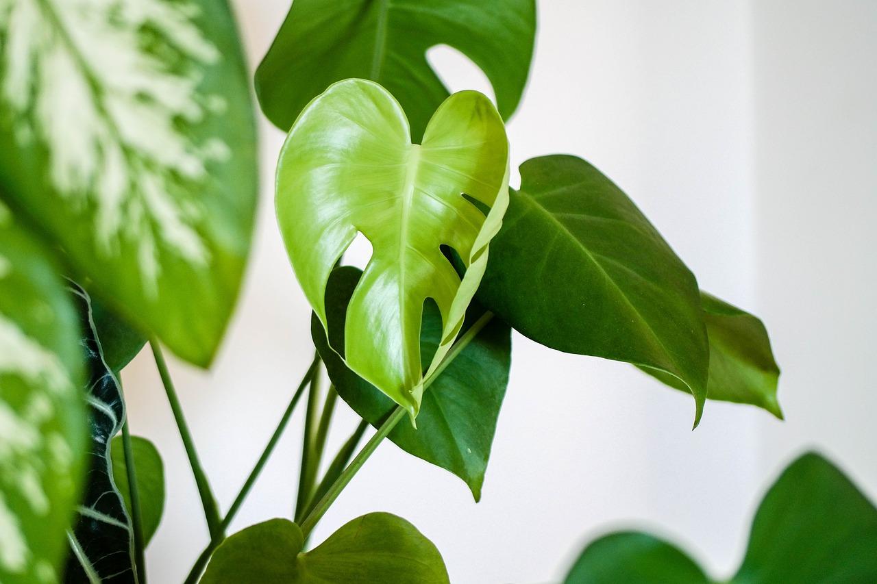 plant-4427146_1280