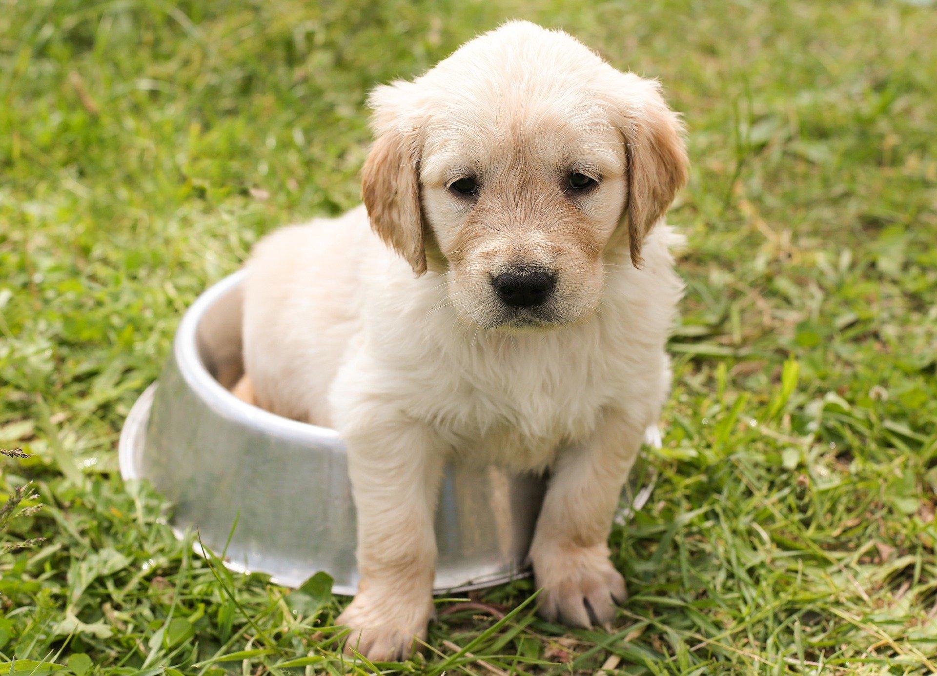 puppy-1207816_1920 (1)