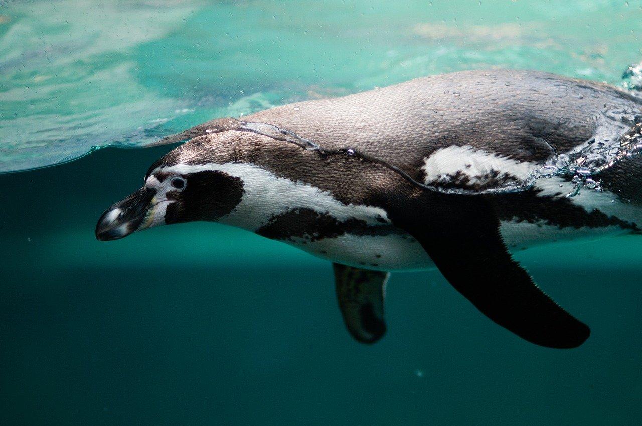 penguin-2203693_1280