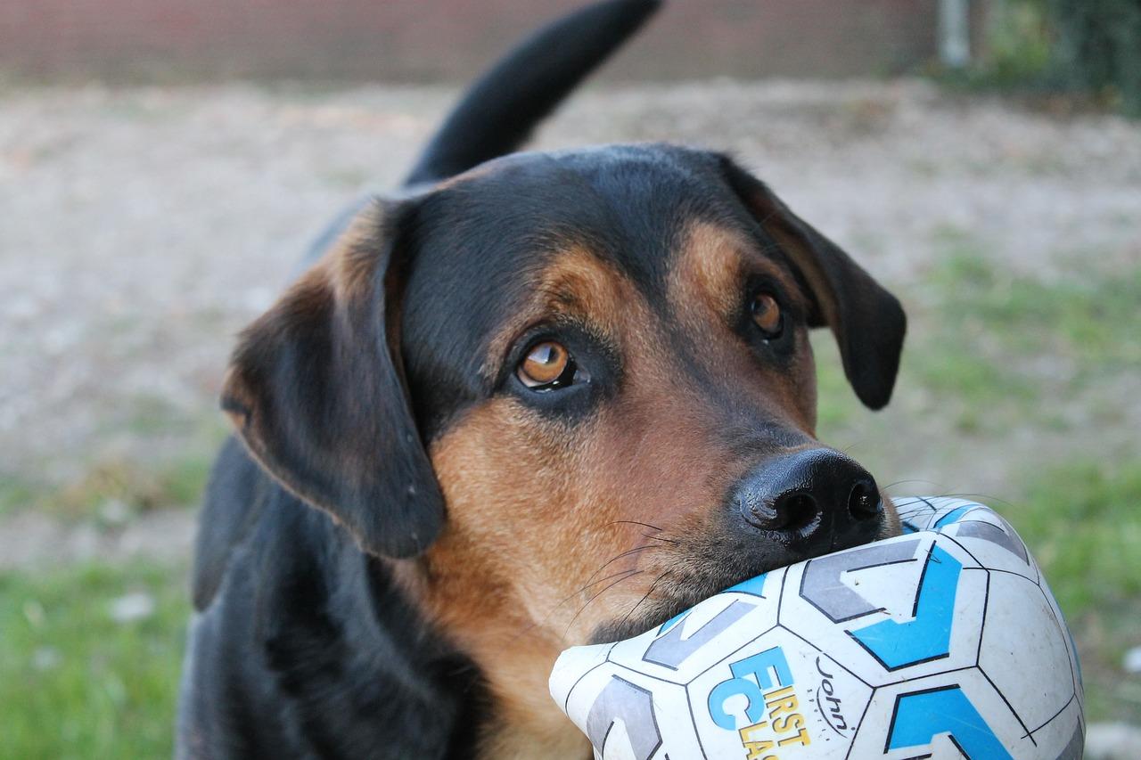 dog-2364940_1280