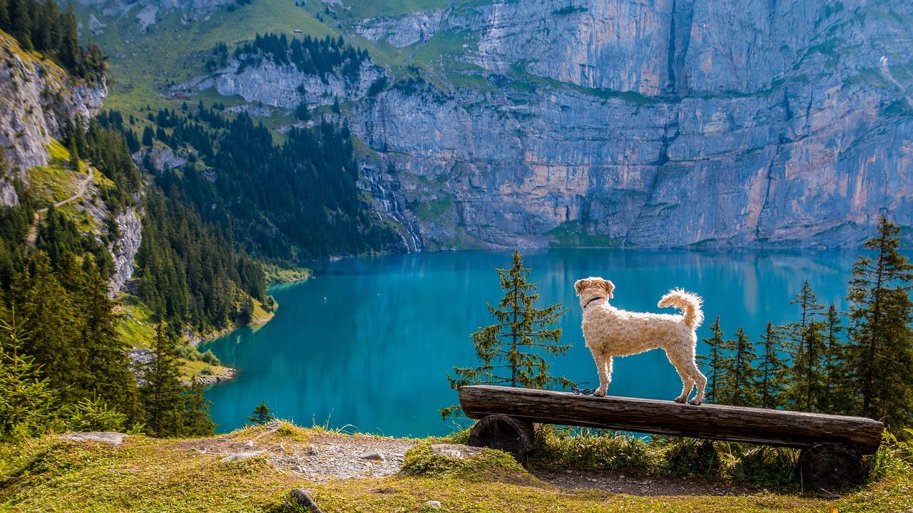 dog lake earth