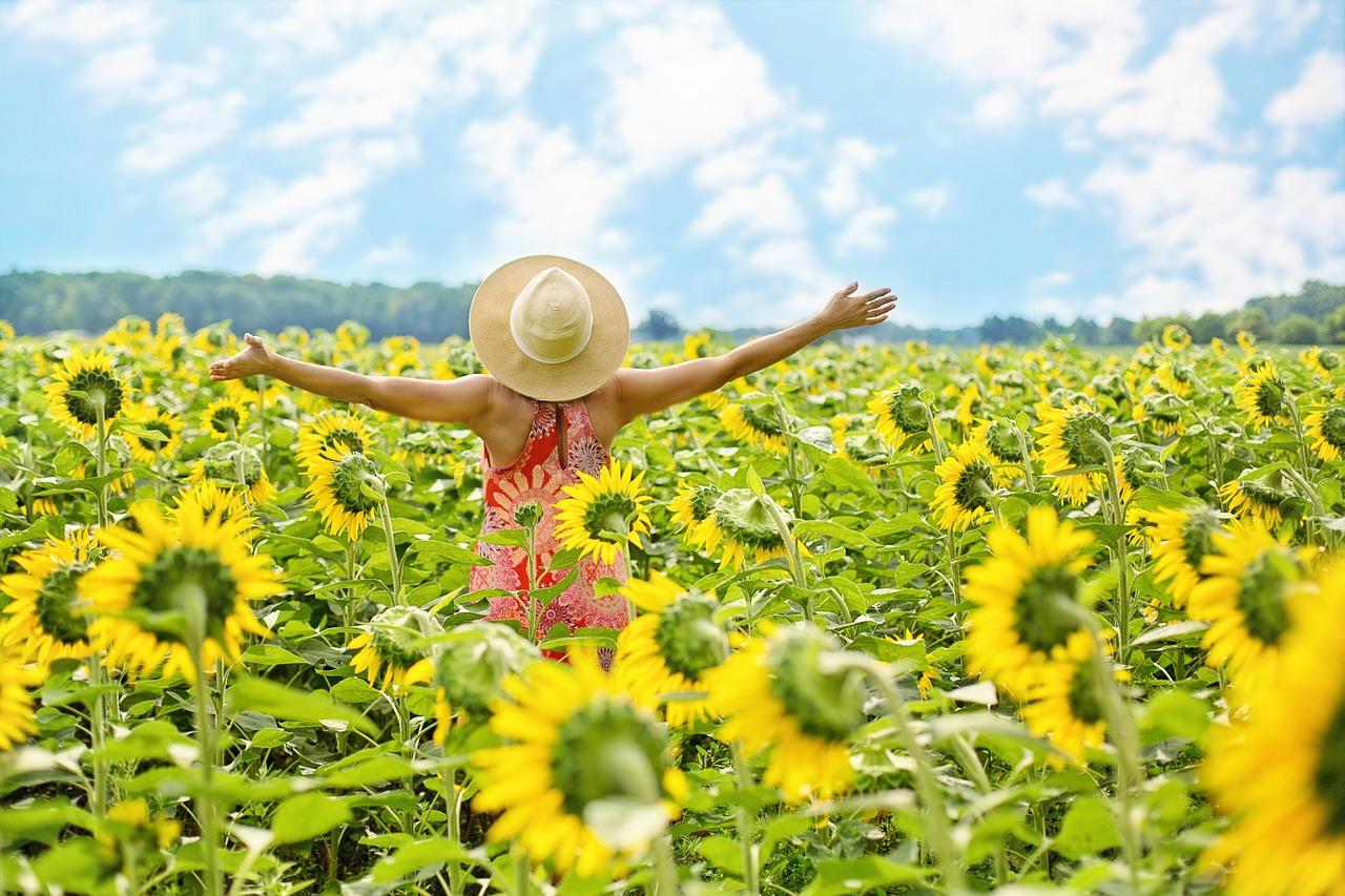 sunflowers-3640938_1280