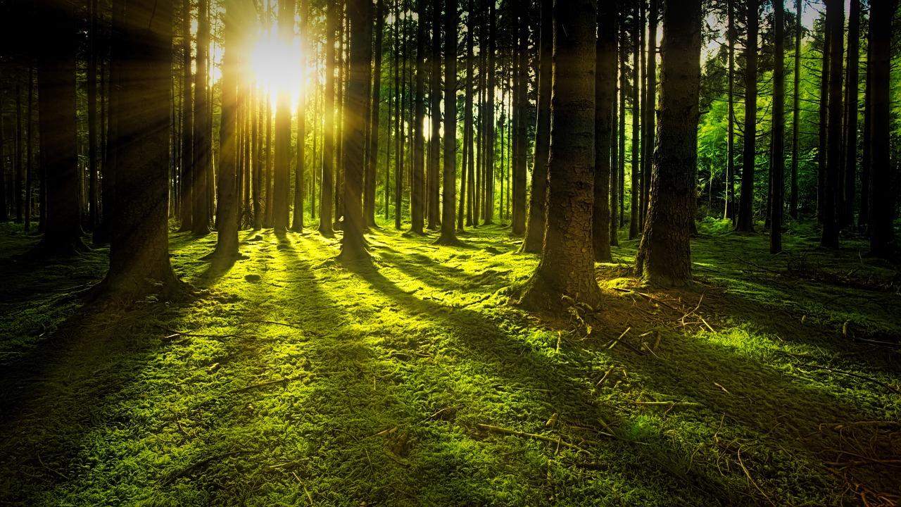 trees-3294681_1280