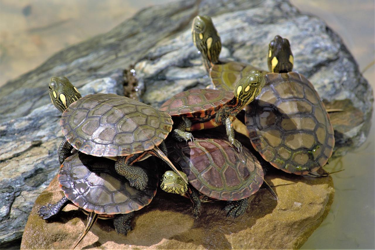 turtles-5402764_1280